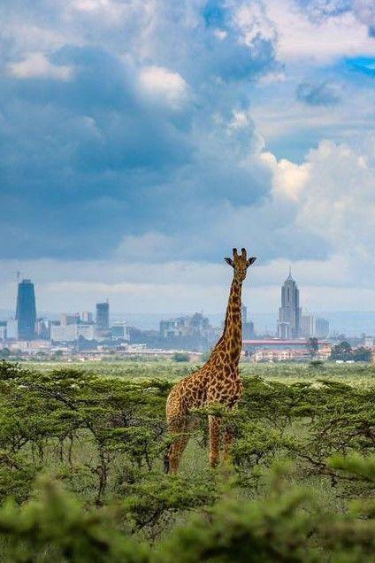 3africa kenya