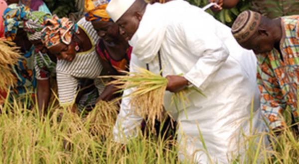 Gambia president farming
